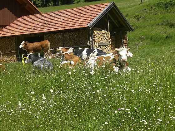 Gästehaus Kugelmühle - Bilder